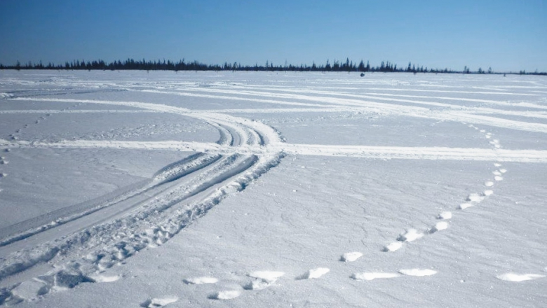 Plenty of snowmobile tracks and two trampled paths made by wolverines.