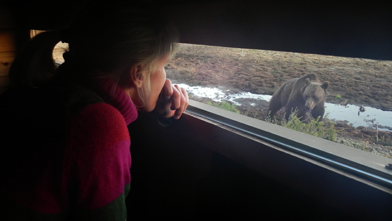 A picture taken from inside an observation deck showing a woman watching a bear coming close to the window.