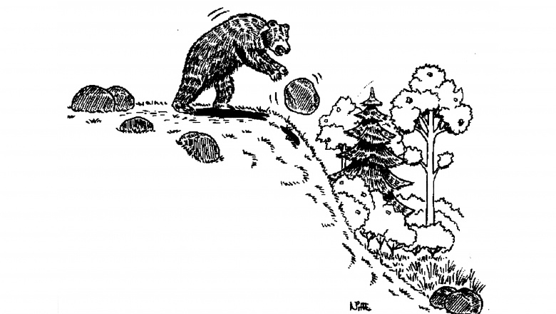 A black and white drawing of a bear throwing a rock down the slope of a hill. The background has trees at the bottom of the hill.